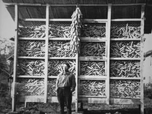 Cribs de maïs